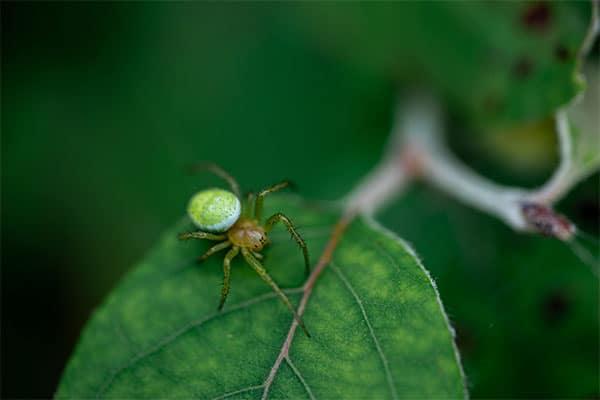 araignée dans une maison